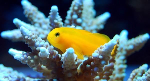 Découvrez Probiotiques Symbio, le complément innovant pour vos changements d'eau de mer.